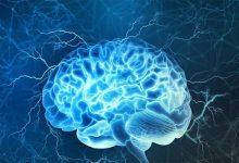 صورة تعرف على مكمّل غذائي للدماغ يحسن الذاكرة اللفظية والوظيفة التنفيذية