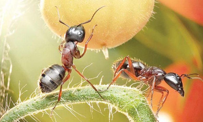 ما تفسير رؤية النمل في المنام لابن سيرين سواح برس