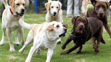 صورة ما تفسير حلم الخوف من الكلاب في المنام لابن سيرين؟