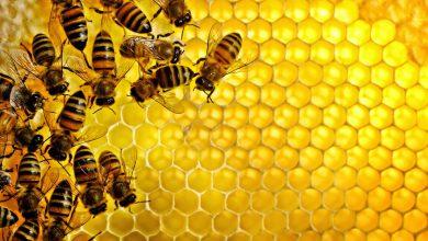 صورة أدق 30 دلالة لتفسير حلم النحل يطاردني في المنام لابن سيرين