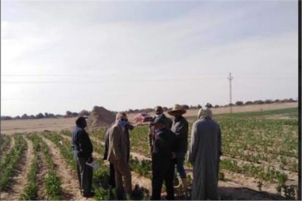 الحملة القومية للنهوض بمحصول الفول البلدي تتفقد حقول الوادي الجديد