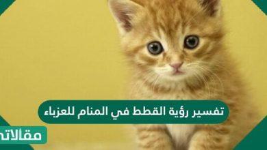 صورة تفسير رؤية القطط في المنام للعزباء والحامل والمتزوجة بالتفصيل