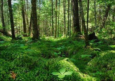 كيف أصبحت مراقبة إزالة الغابات مجانية وسهلة لأي شخص؟