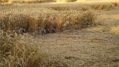 صورة تغير المناخ يضرب المحاصيل.. اضطرابات بتوقيتات الزراعة والحل في التشجير
