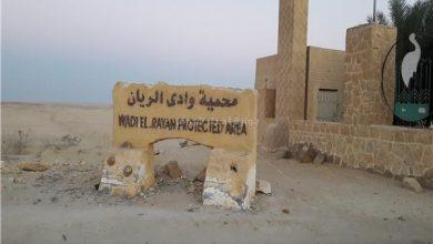 مدخل محمية وادي الريان