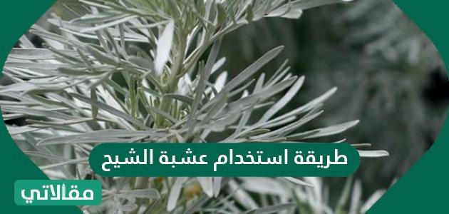 موقع خبرني فوائد عشبة الشيح