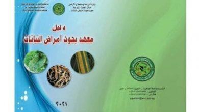 معهد بحوث أمراض النباتات