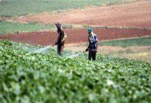 صورة 5 توصيات من «الزراعة» لحماية محاصيل الخضر من تأثيرات الموجة الحارة