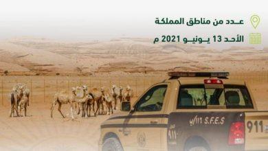 «الأمن البيئي»: إيقاف 36 مخالفاً ارتكبوا مخالفات رعي في مواقع ممنوعة - أخبار السعودية