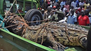 القبض على «أسامة الخطير».. قاتل العشرات في أوغندا - أخبار السعودية