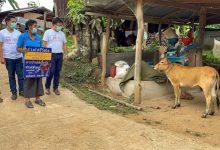 دجاج وأبقار وشقق.. محفزات في آسيا لتشجيع السكان على التطعيم