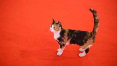 """قتل """"قطة"""" مهرجان القاهرة السينمائي بالسم وتفريغ كاميرات المراقبة لمعرفة القاتل"""