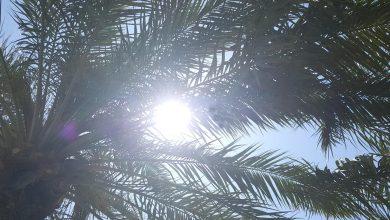 «الأرصاد»: الطقس شديد الحرارة والرياح قد تثير الغبار