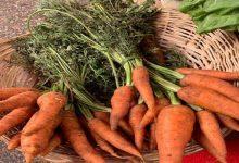 أسعار الخضراوات و الفاكهة فى سوق العبور اليوم الجمعة