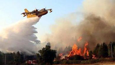 طائرتان من الاتحاد الأوروبي تكافحان حرائق الجزائر