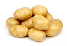 صادرات مصر من البطاطس