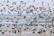 دراسة تكشف تغيرات في سلوك الطيور بسبب كورونا
