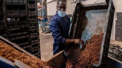 قصة مزرعة تحوّل الذباب إلى طعام للحيوانات الأليفة وربما للبشر