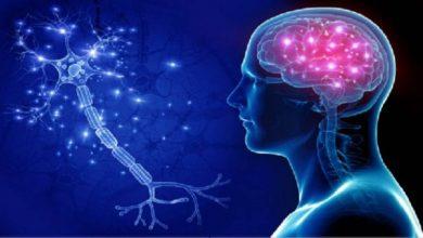 كيف تحافظ على دماغك صحيا.. دراسة تكشف مكملا غذائيا يحافظ على الذاكرة - أخبار السعودية